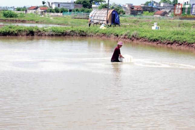 Nam Thịnh: Tập trung khắc phục bệnh đốm trắng trên tôm