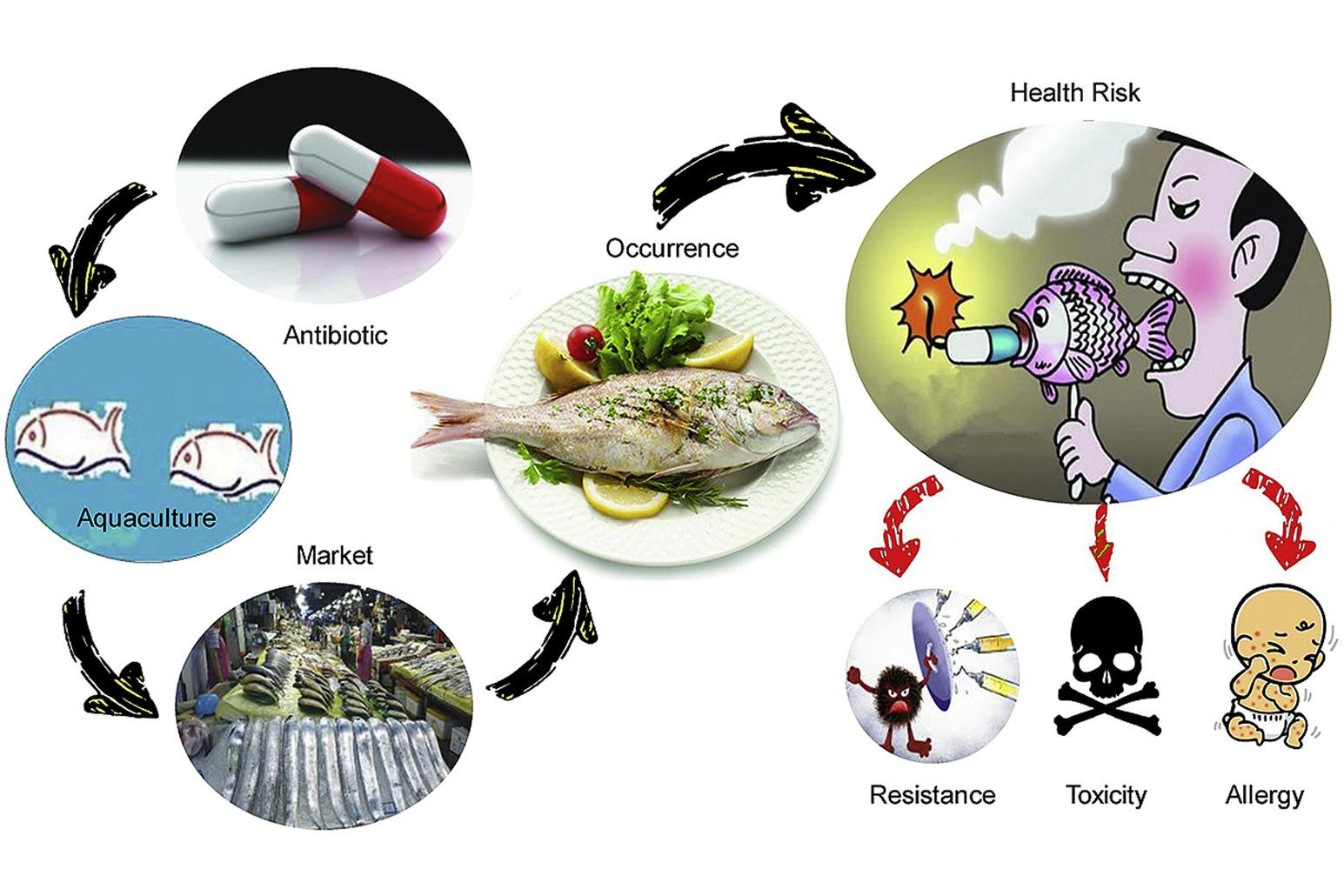 Những chứng nhận quốc tế về sử dụng kháng sinh