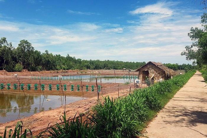 300 tấn nghêu chất bất thường do đầm nuôi tôm xả thải?