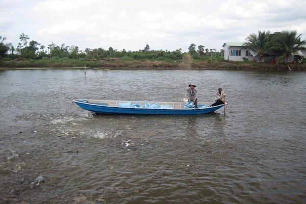 Các biện pháp chống nóng cho động vật thủy sản