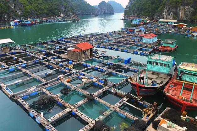 Điều kiện cơ sở nuôi trồng thủy sản