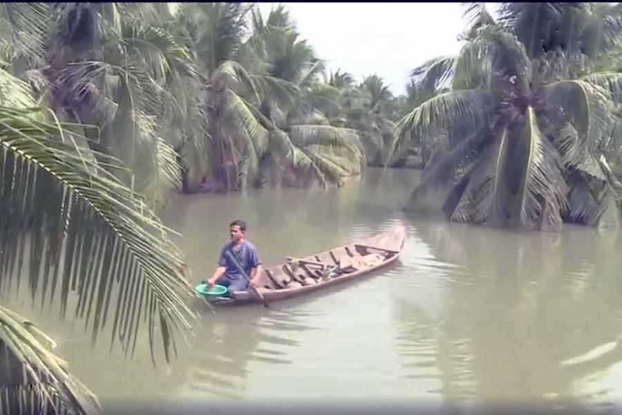 Kinh nghiệm nuôi tôm càng xanh trong vườn dừa hiệu quả