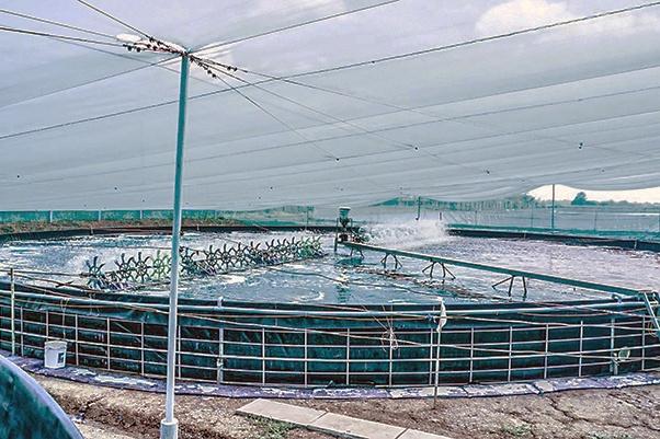 Đầu tư nhiều dự án điện phục vụ nhu cầu nuôi tôm