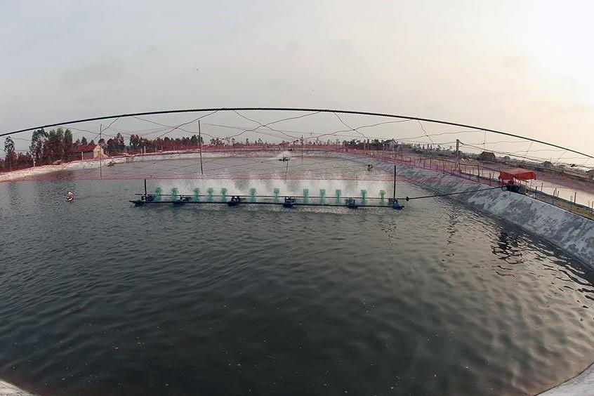 Kiên Giang phát triển nuôi tôm công nghiệp bán công nghiệp