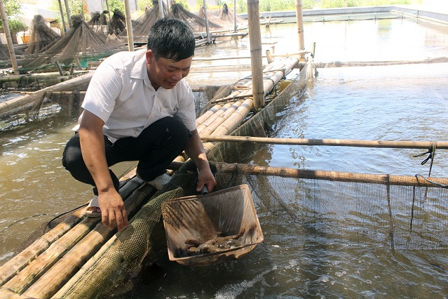 Thăm trang trại sản xuất cá bống bớp thu tiền tỷ mỗi năm