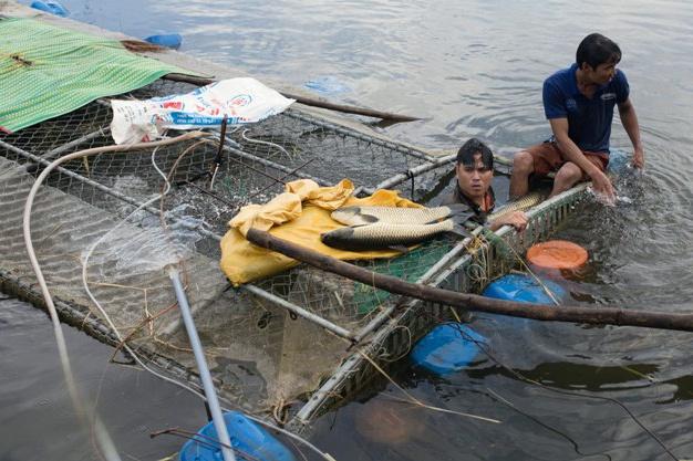 Giải cứu cá lồng trên sông Bồ