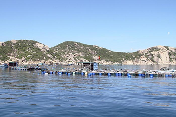 Khánh Hòa: Khó di dời lồng tôm đến vùng quy hoạch
