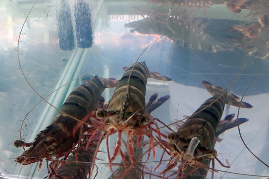 Đề xuất 5 đối tượng thủy sản nuôi chủ lực