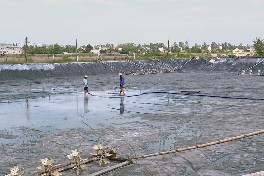 Sóc Trăng: Độ mặn giảm thấp không thích hợp lấy nước nuôi tôm