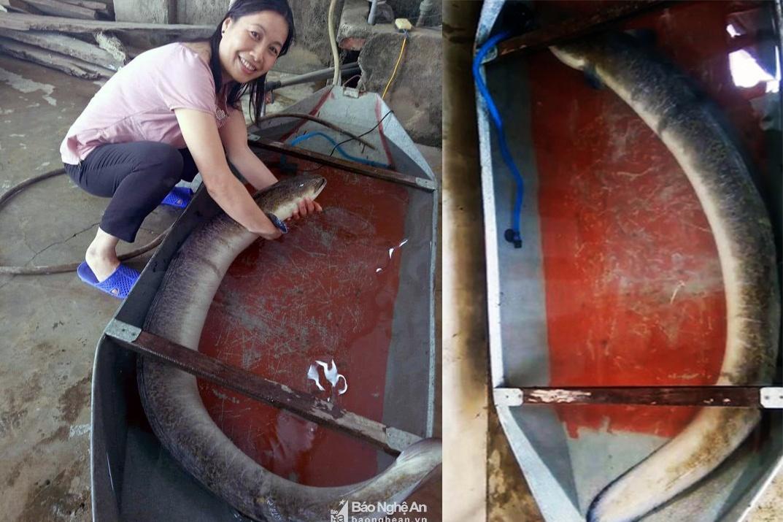 Ngư dân bắt được cá lệch 16 kg