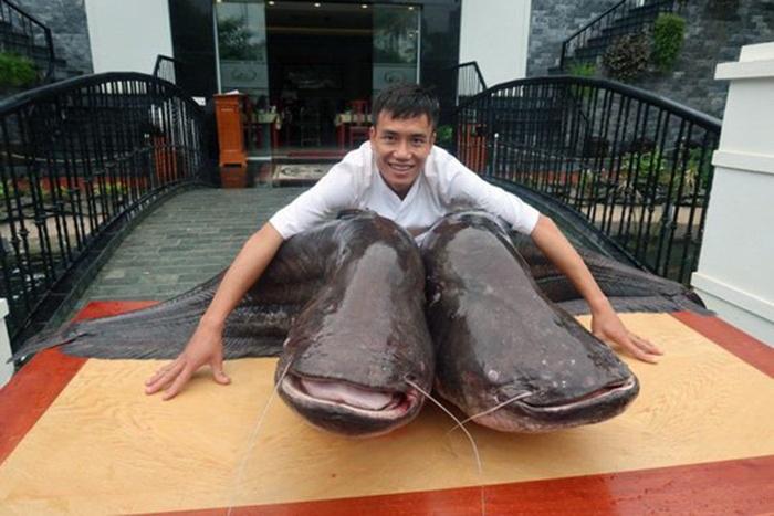 Đại gia Bắc Ninh mua cặp cá leo khổng lồ nặng hơn tạ từ Campuchia