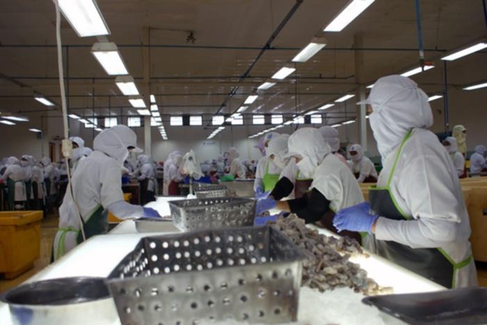 Khan hiếm tôm nguyên liệu, giá tôm tại Ấn Độ tăng nhanh