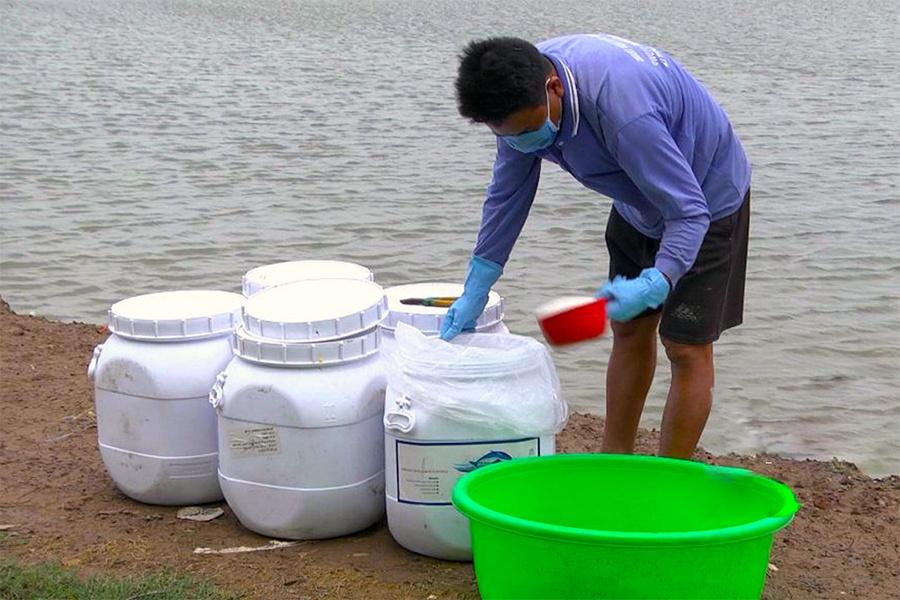 Sóc Trăng có hơn 6.870 ha tôm nuôi bị thiệt hại do dịch bệnh