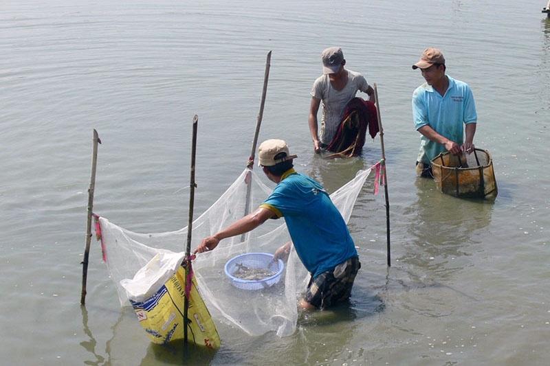 Quảng Nam: Người nuôi tôm cần đề phòng những ngày nắng nóng xen kẽ mưa rào