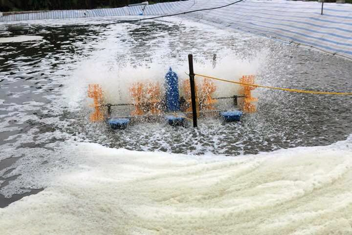 Một số lưu ý khi sử dụng men vi sinh trong nuôi trồng thủy sản