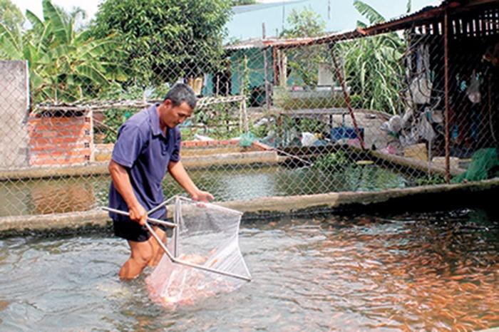 Cần Thơ ứng dụng công nghệ mới vào sản xuất giống thủy sản