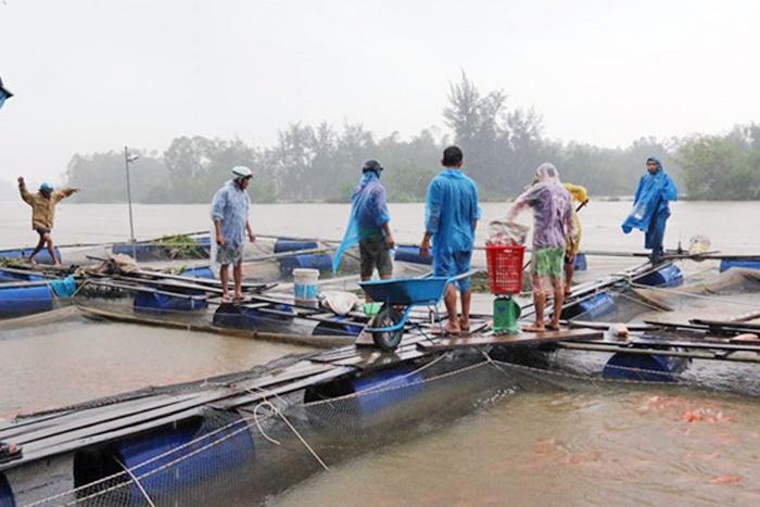Rủi ro nuôi cá trong mùa mưa lũ