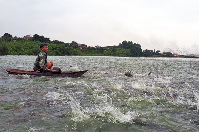 Cựu chiến binh Nguyễn Văn Ly làm giàu từ nuôi cá rô phi