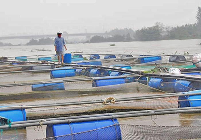 Cảnh báo việc nuôi cá lồng bè trên sông