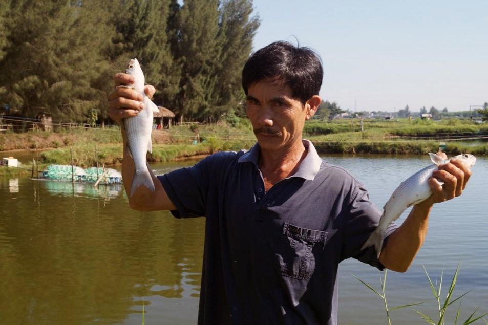 Quảng Ngãi: Nuôi ghép tôm với cá đối đạt hiệu quả