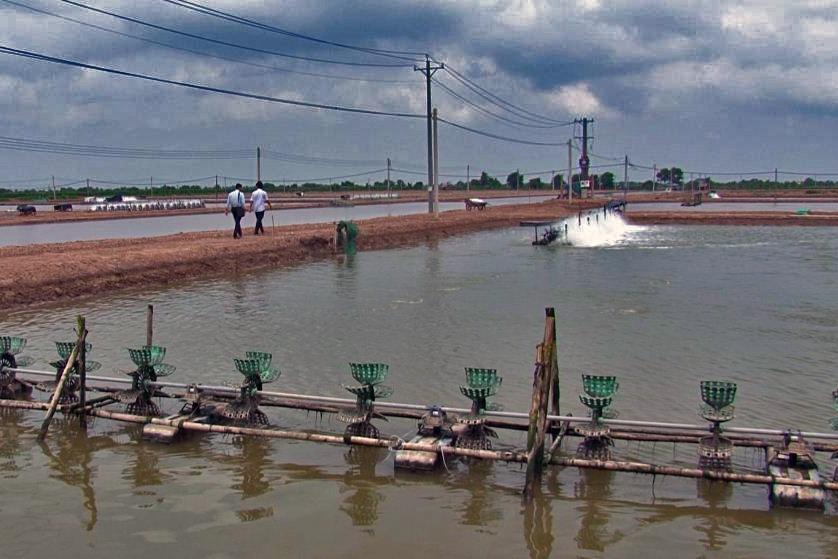 TP Hồ Chí Minh: Tình hình và giải pháp khuyến cáo nuôi thủy sản mùa mưa | Tin thủy sản