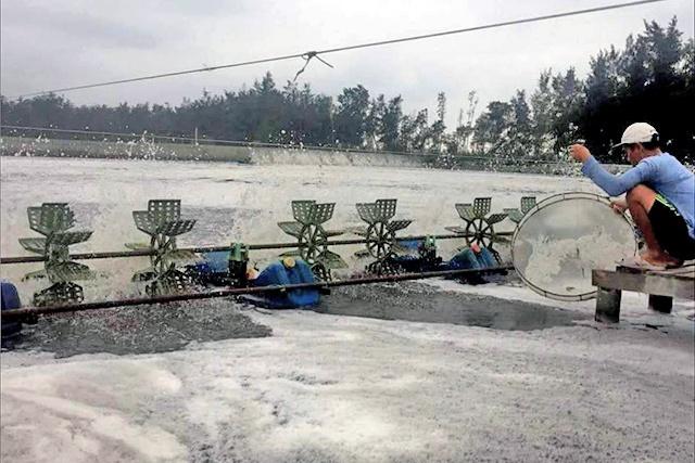 Thừa Thiên Huế: Bảo vệ tôm nuôi trong mùa mưa lũ