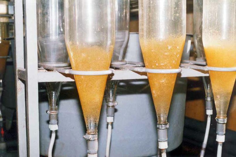 Ảnh hưởng độ cứng từ Mg và Ca trong hệ thống ấp trứng cá | Tin thủy sản