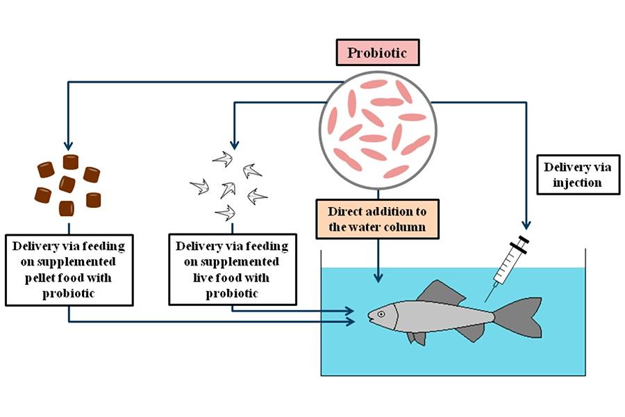 Lưu ý để quản lý hiệu quả probiotics trong ao nuôi