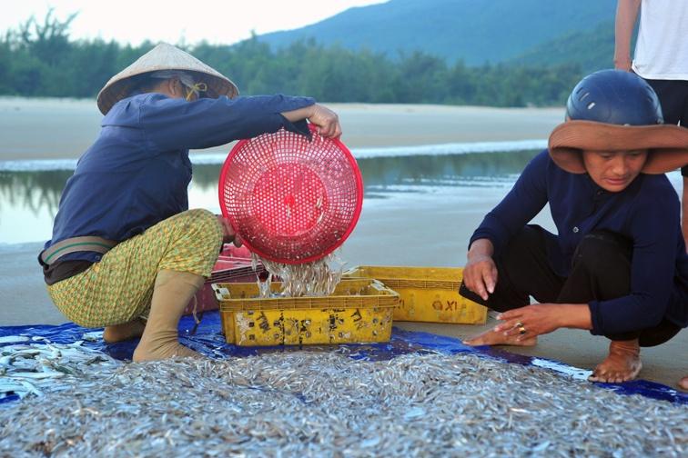 Trúng đợt cá cơm, ngư dân Thừa Thiên Huế có nguồn thu nhập cao
