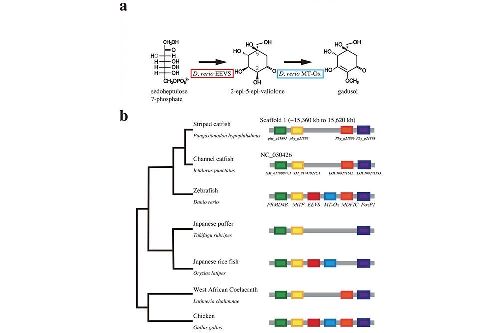 Hệ gen của cá tra lần đầu tiên đã được giải mã