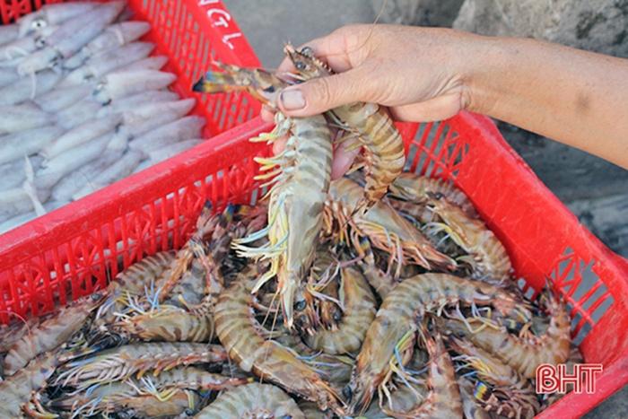 Cẩm Xuyên: Khai thác, nuôi trồng đạt 8.000 tấn thủy sản