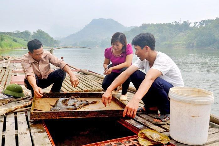 Nuôi loài cá thịt vàng ươm, bán 1 con lãi cả triệu