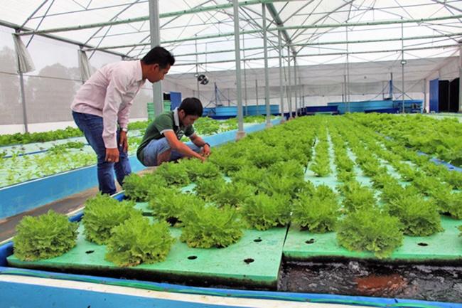 Hướng mới từ nuôi cá chạch lấu kết hợp với trồng rau thủy canh