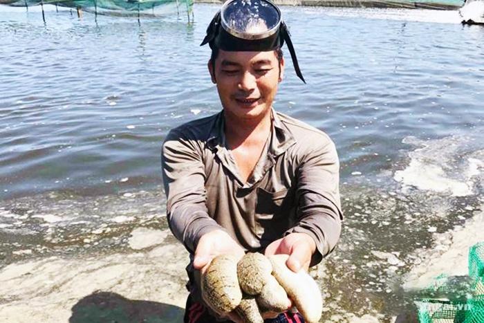 Nuôi hải sâm kết hợp ốc hương: Hướng mới cho nuôi trồng thủy sản