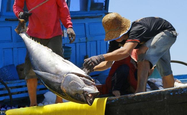 Giải bài toán nhân lực ngành thủy sản