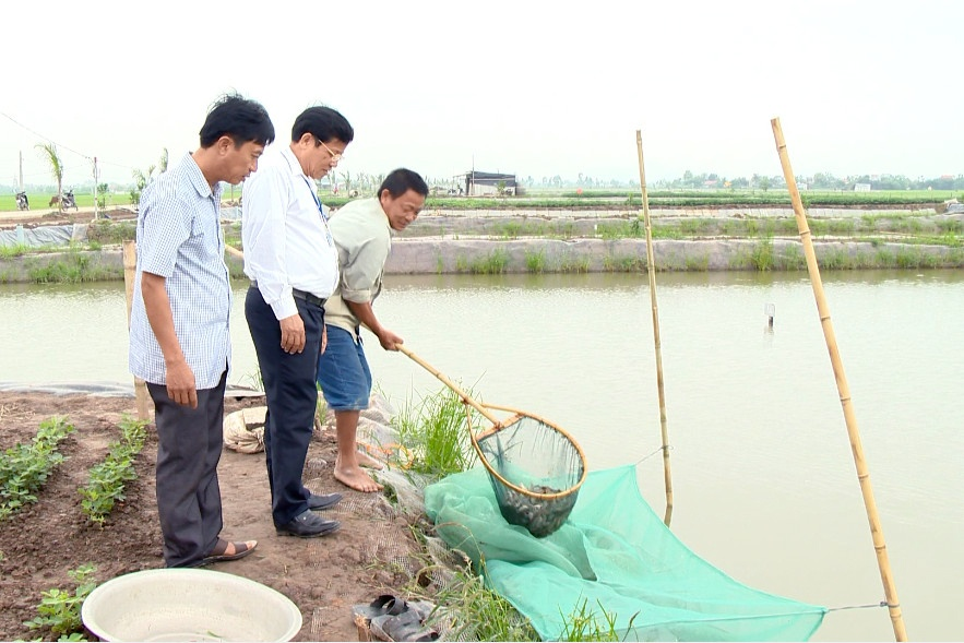 Ninh Bình: Hiệu quả từ chuyển diện tích lúa kém hiệu quả sang thủy sản