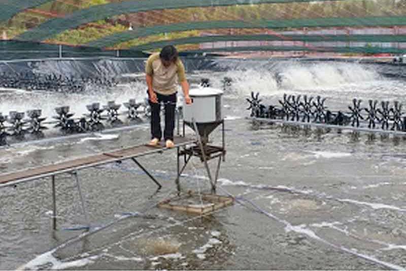 Nuôi tôm công nghệ cao ở Cần Giờ - TP HCM | Tin thủy sản