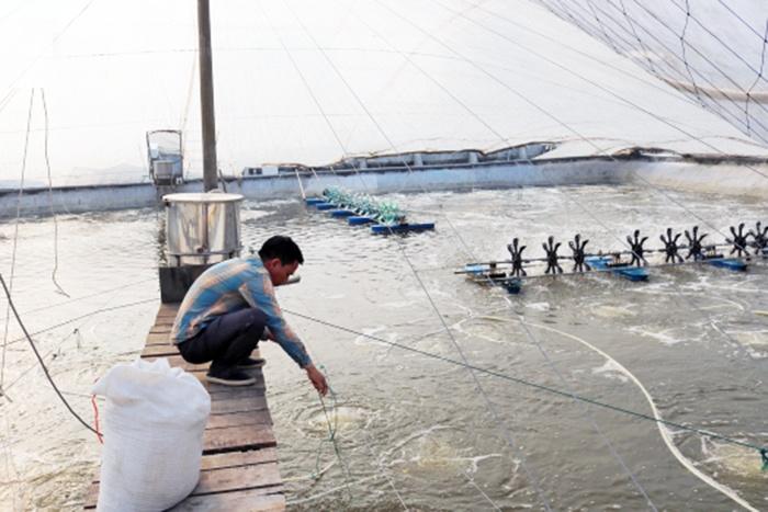 Chủ động bảo vệ thủy sản trong vụ đông