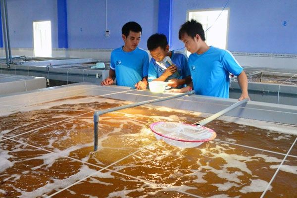 Ninh Thuận: Nuôi trồng thủy sản khả quan 9 tháng đầu năm