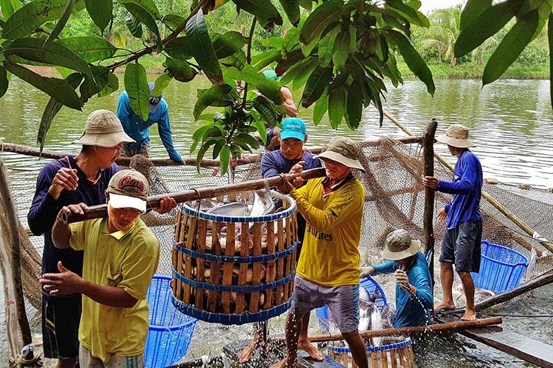 Thủy sản tăng tốc phát triển
