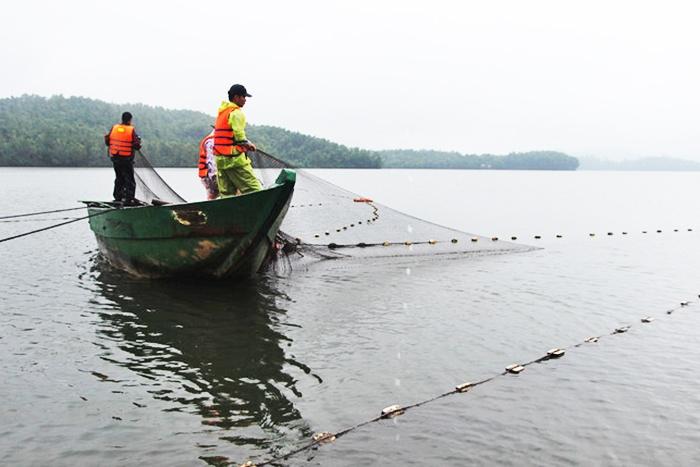 Bắt năm tấn cá mè khi hồ thủy lợi xả nước