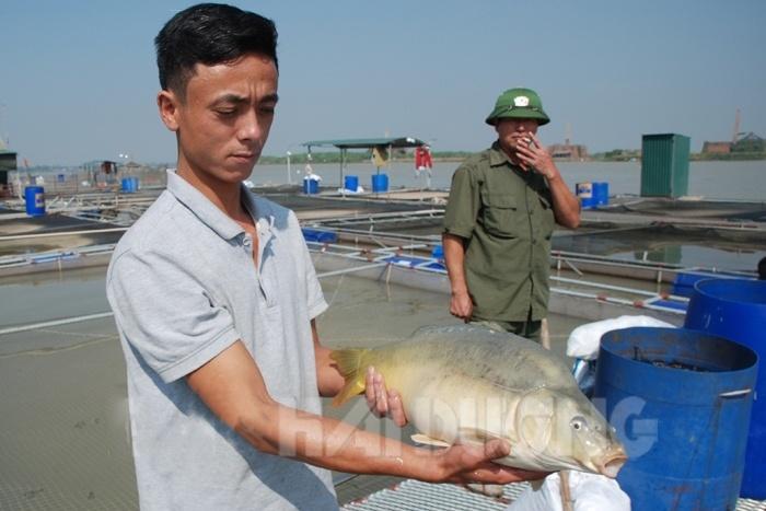 Người đi đầu nuôi cá chép không vảy