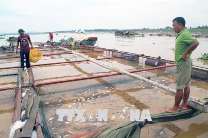 Cá giống chết ở làng bè La Ngà là hiện tượng bình thường
