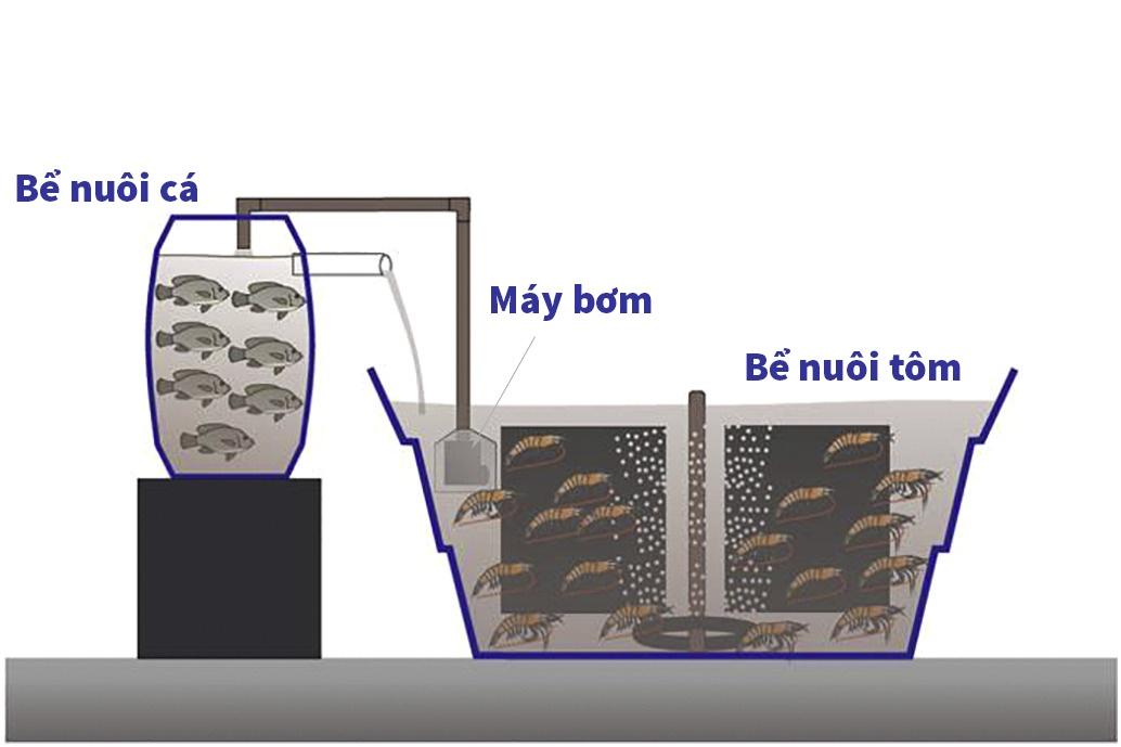 Hệ thống biofloc tích hợp tôm thẻ chân trắng và cá rô phi