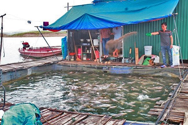 Yên Bái: Tình trạng vi phạm nuôi cá lồng trái phép trên hồ Thác Bà