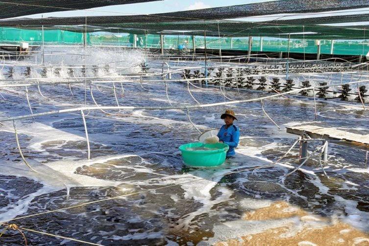 Vĩnh Lợi: Đưa nông dân đi học nuôi tôm công nghệ cao