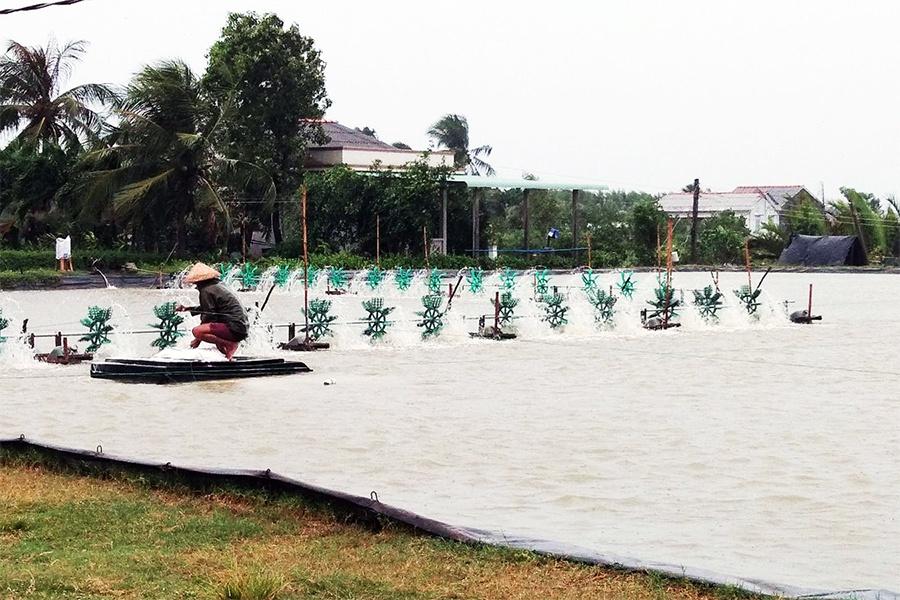 Bạc Liêu: Nuôi tôm nước lợ phải đáp ứng quy định bảo vệ môi trường