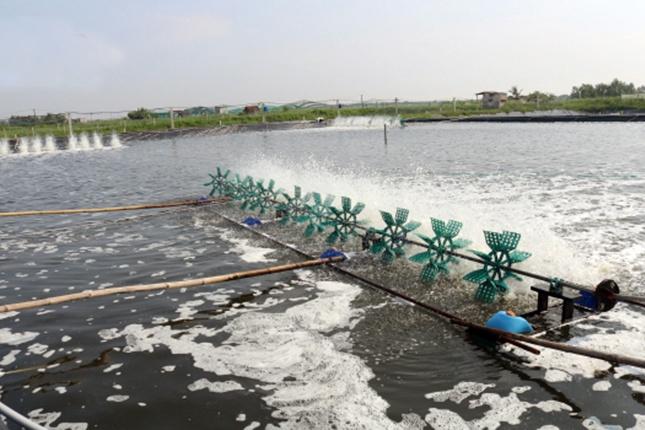 Lưu ý đối với tôm nuôi trong vùng nước có độ mặn thấp