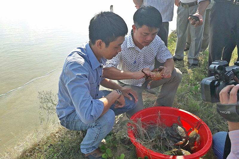 Tôm thẻ - cua - cá đối mục: Hướng đi mới cho vùng nuôi tôm thường xuyên dịch bệnh