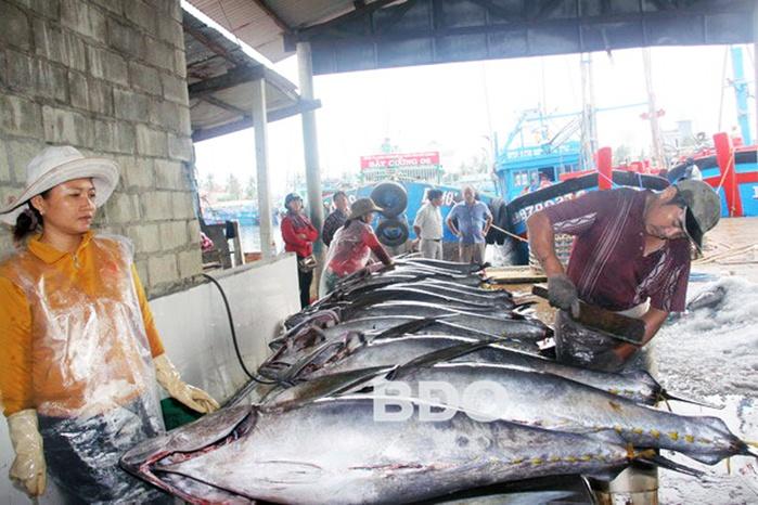 Ngư dân Bình Định vui mùa cá ngừ đại dương
